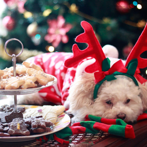 5 Holiday Treats to Keep Away from Your Canine